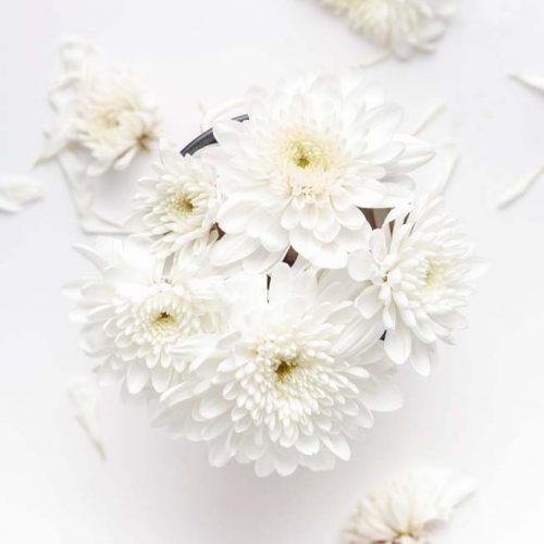 White-flowers-Kopie-scaled
